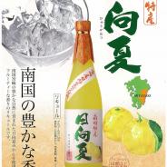 【新商品】日向夏のリキュール